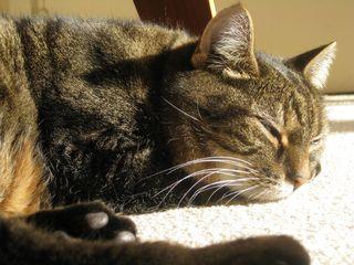 Dido nap